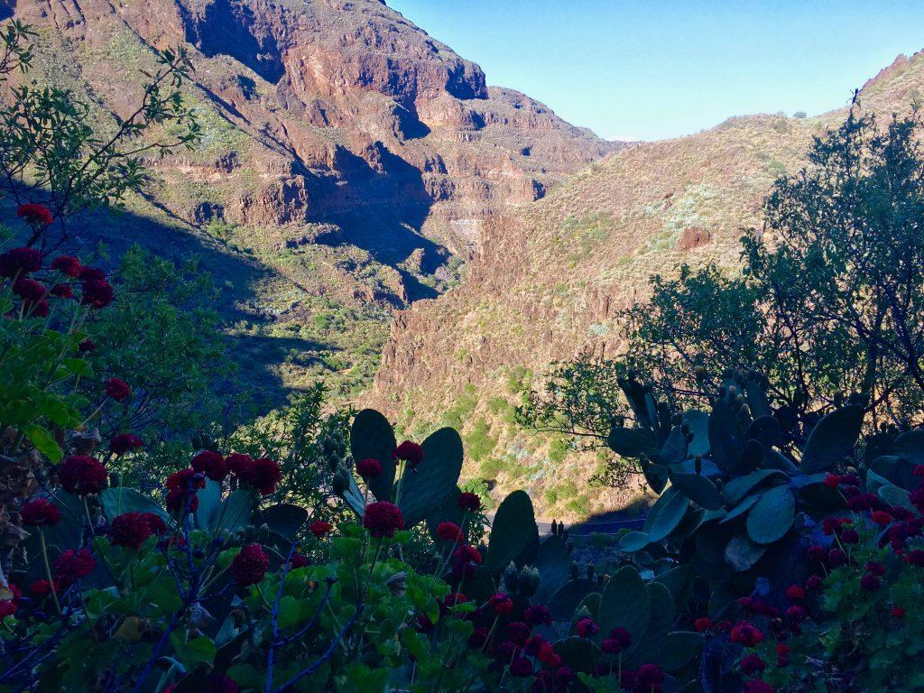 Der Gran Canyon von Gran Canaria? Das Tal im Inselinneren der Insel ist stellenweise richtig grün mit viel Vegetation. Foto: Sascha Tegtmeyer