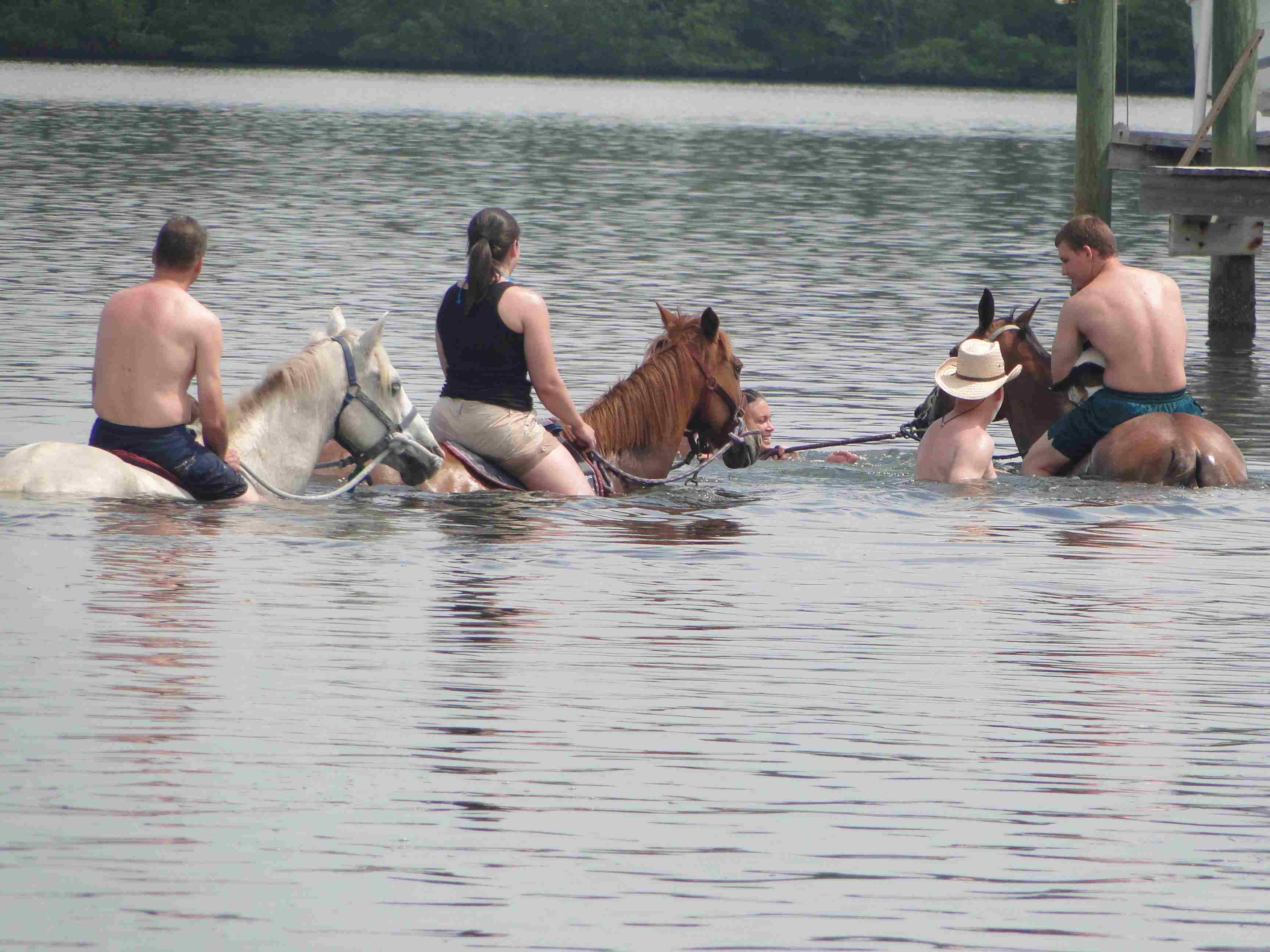 Auf dem Pferd geht es ins Wasser: Mutige versuchen zu surfen. Foto: Bradenton Area
