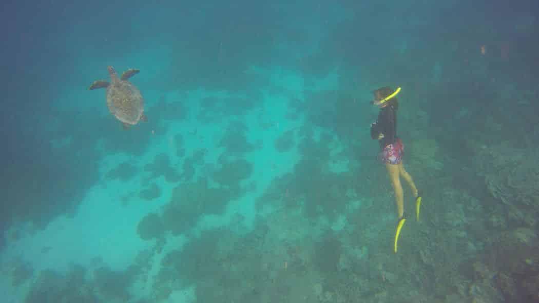 Meeresbiologin Sonia Valladares in Aktion: Die Dokumentation der Schildkröten-Population rund um Coco Bodu Hithi gehört zu ihrem Job. Foto: Sascha Tegtmeyer