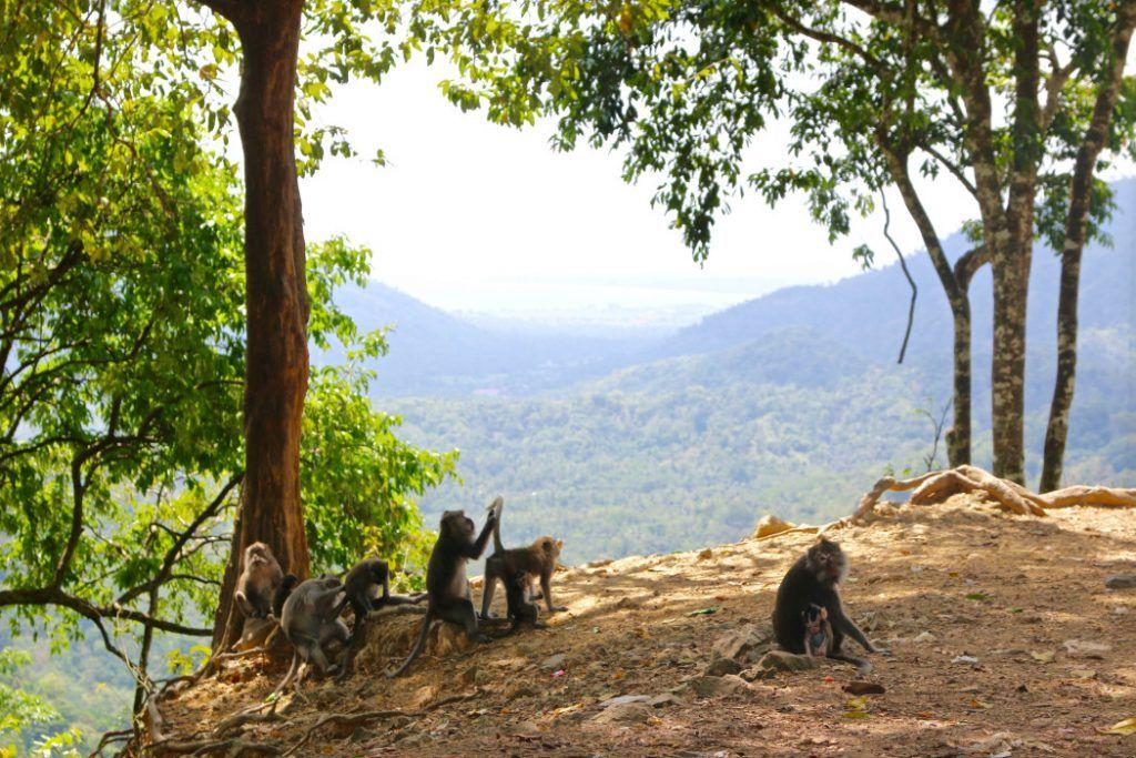 Wilde Affen im Regenwald auf Lombok. Foto: S. Tegtmeyer