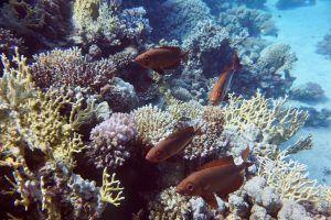 Fische am Riff: Besonders in der Nähe der Oberfläche sind die Riffe einfach wunderschön bunt! Foto: Sascha Tegtmeyer