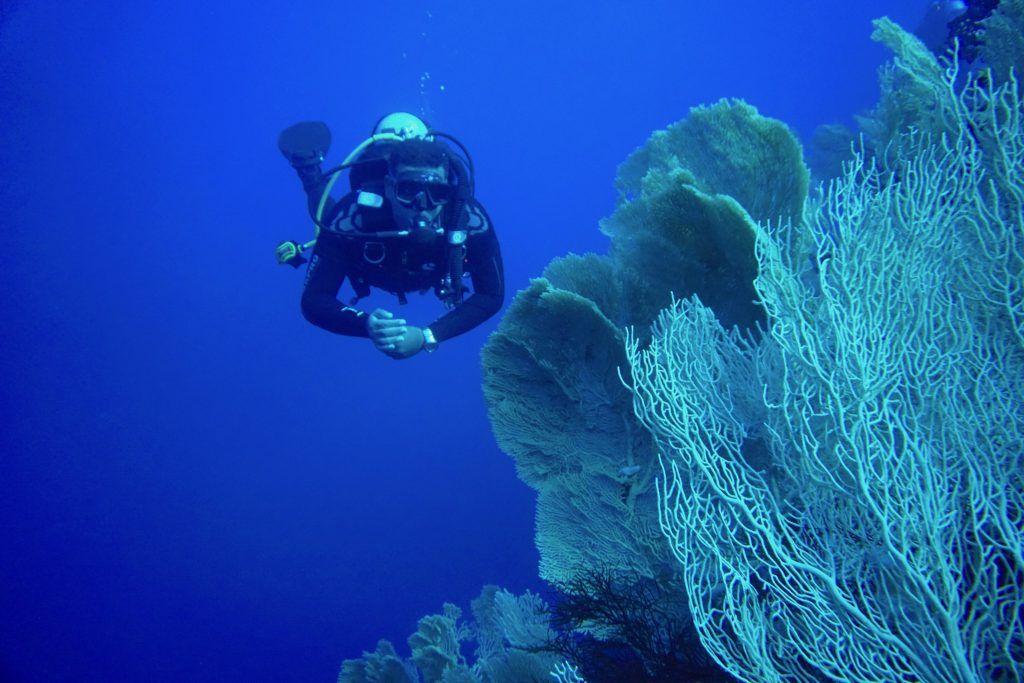 Herrliche Fächerkorallen: Die Riffe im Roten Meer sind wunderbar intakt. Foto: Sascha Tegtmeyer