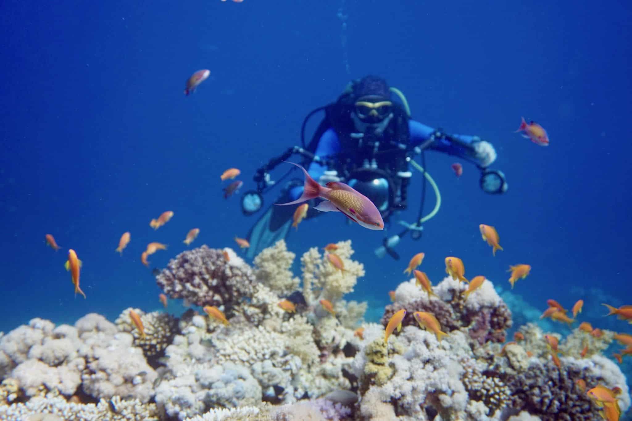 sharm el sheik reise urlaub tipps cleopatra luxury resort vip diving college tauchen ORG DSC01341 Reisebericht Sharm El Sheikh: Tipps zu Sehenswürdigkeiten und Aktivitäten