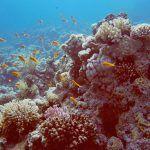 Lebendiges Riff: Am Jackson Riff tobt das Leben unter Wasser. Foto: Sascha Tegtmeyer