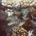 sharm el sheik reise urlaub tipps cleopatra luxury resort vip diving college tauchen ORG DSC01355