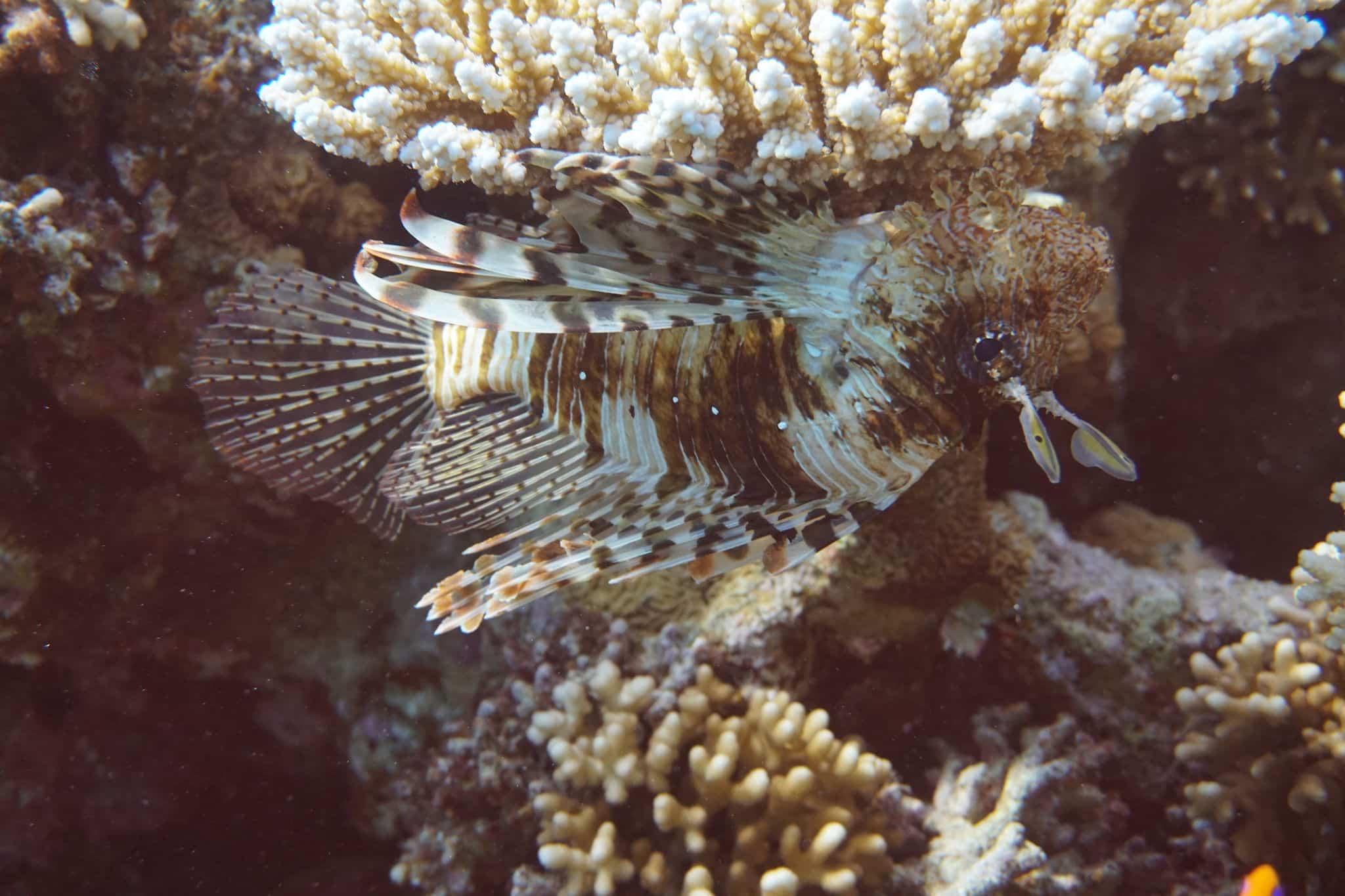 sharm el sheik reise urlaub tipps cleopatra luxury resort vip diving college tauchen ORG DSC01355 Reisebericht Sharm El Sheikh: Tipps zu Sehenswürdigkeiten und Aktivitäten