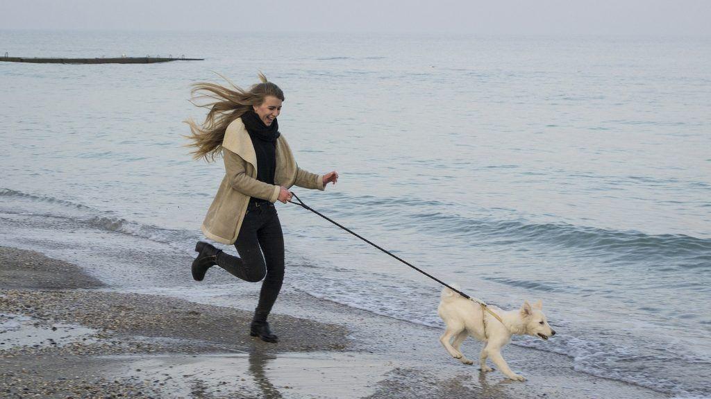 Ein Ostsee-Urlaub mit Hund ist ein unvergesslich schönes Erlebnis. Foto: Pixabay