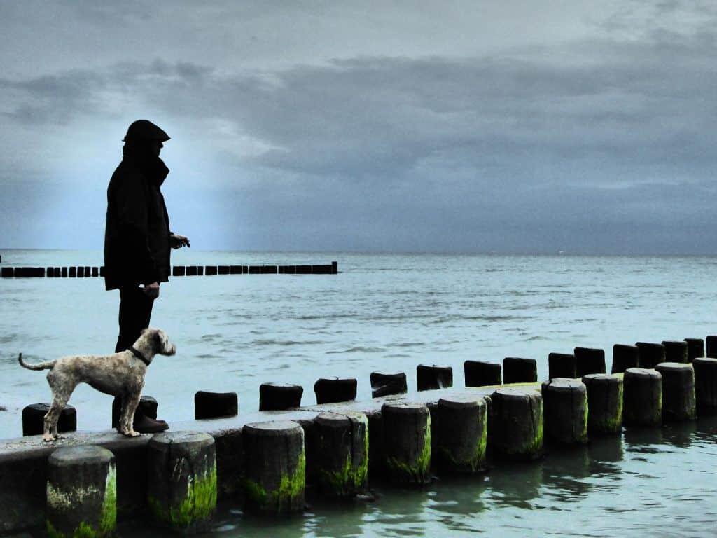 Im Winter dürfen Hunde überall in der Lübecker Bucht an den Strand. Foto: Pixabay