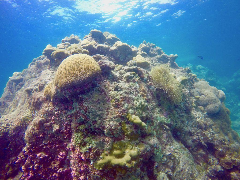 Tauchen auf Koh Lipe: unter Wasser warten viele bunte Korallen. Foto: Sascha Tegtmeyer