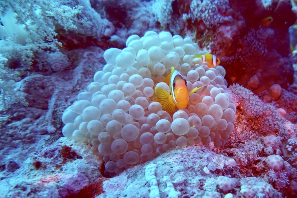 Tauchurlaub: Eines der größten Abenteuer ist es, die Unterwasserwelt zu erforschen! Foto: Sascha Tegtmeyer