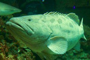 Fisch im Tropen-Aquarium Hamburg: Viele exotische Arten können hier bestaunt werden. Foto: Sascha Tegtmeyer