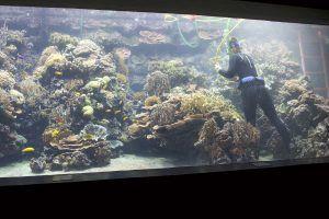 Tierpflegerin Heidi Rohr reinigt ein Korallenbecken im Tropen-Aquarium Hamburg. Foto: Sascha Tegtmeyer