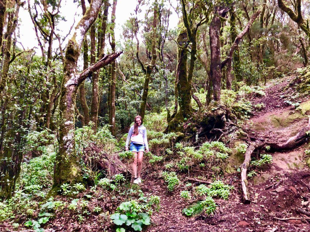 Im Wald des Anaga-Gebirges kann man wunderbar wandern gehen. Foto: Sascha Tegtmeyer