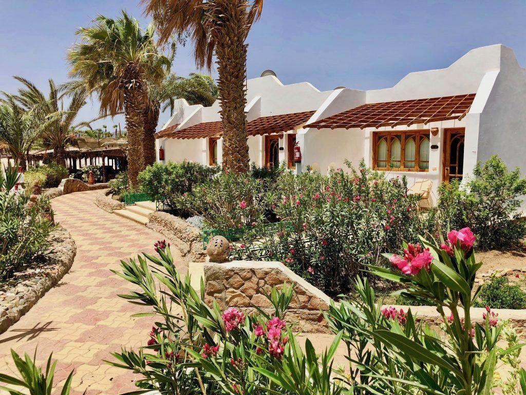 Verhältnismäßig günstig ist ein Sommerurlaub in Ägypten. Foto: Sascha Tegtmeyer