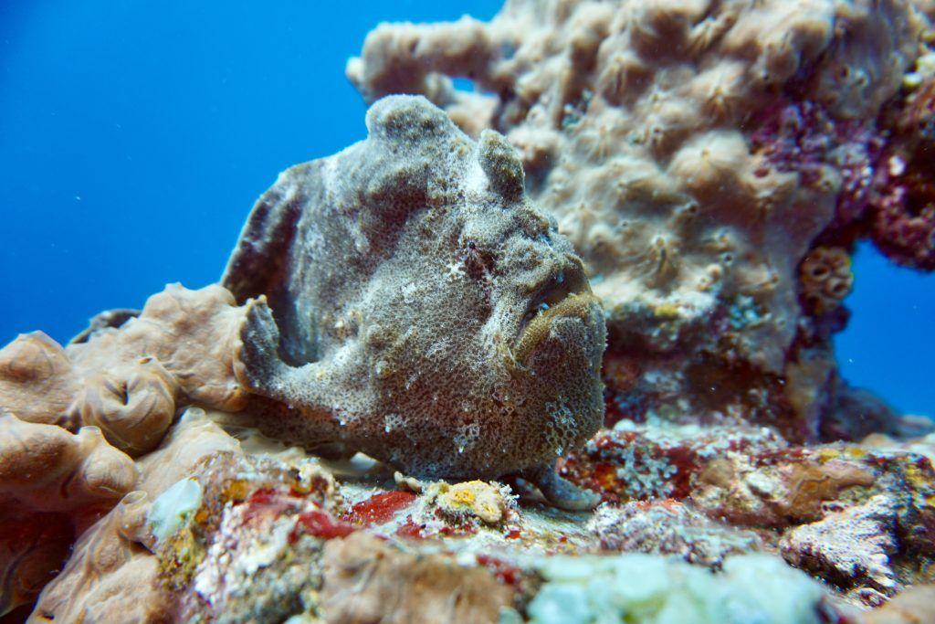 Gut getarnter Fisch: Auf Mauritius gibt es eine unheimlich artenreiche Tierwelt im Meer. © Sascha Tegtmeyer