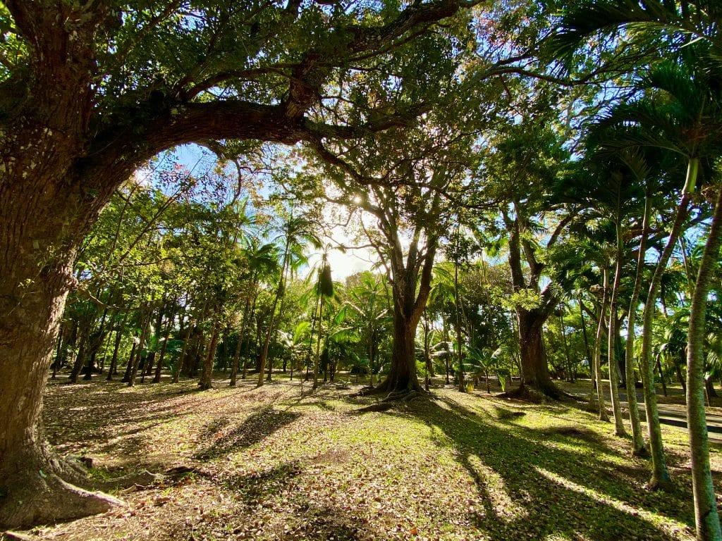Der Sir Seewoosagur Ramgoolam Botanical Garden (Pamplemousses Botanical Garden) ist ein Naturpark nördlich von Port Louis.© Sascha Tegtmeyer