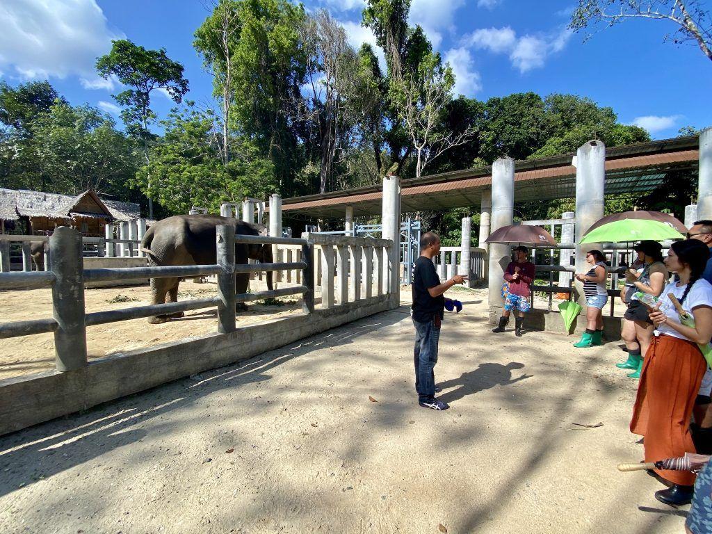 Einige Elefanten müssen medizinisch versorgt werden, nachdem sie im Phuket Elephant Sanctuary eintreffen. Foto: Sascha Tegtmeyer