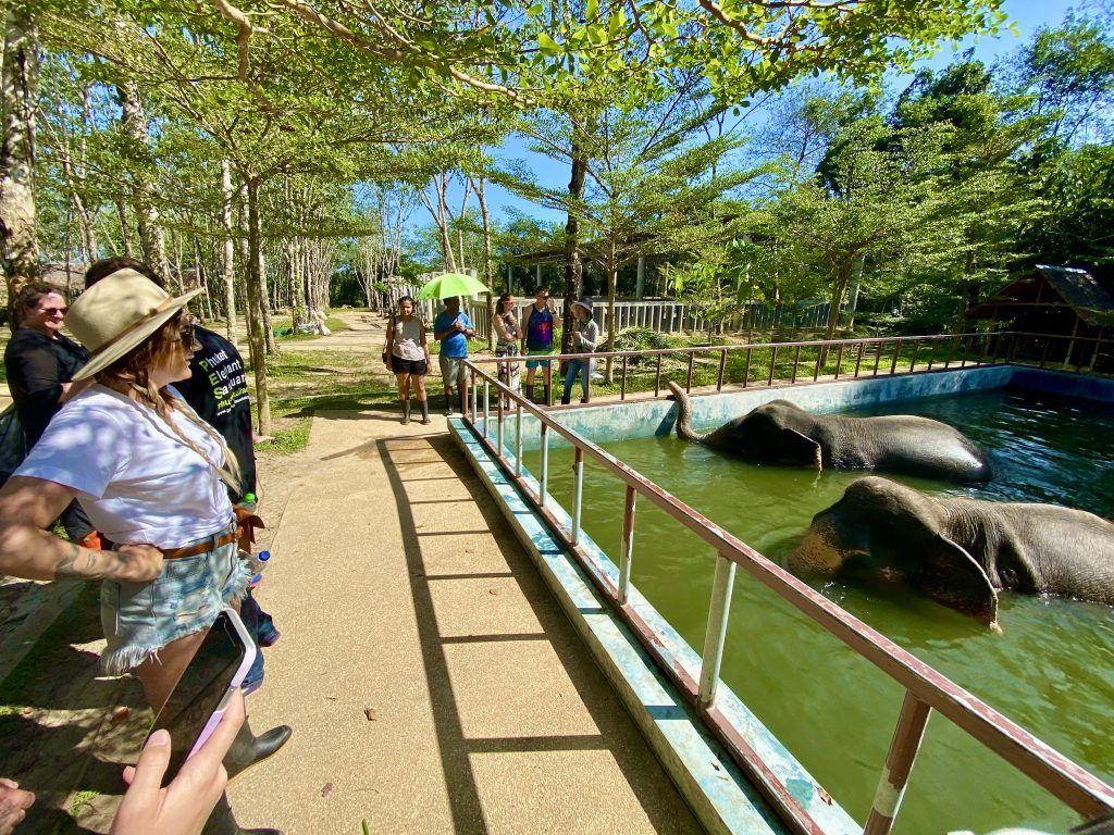 phuket elephant sanctuary erfahrungen elefanten thailand preise anfahrtIMG 0187