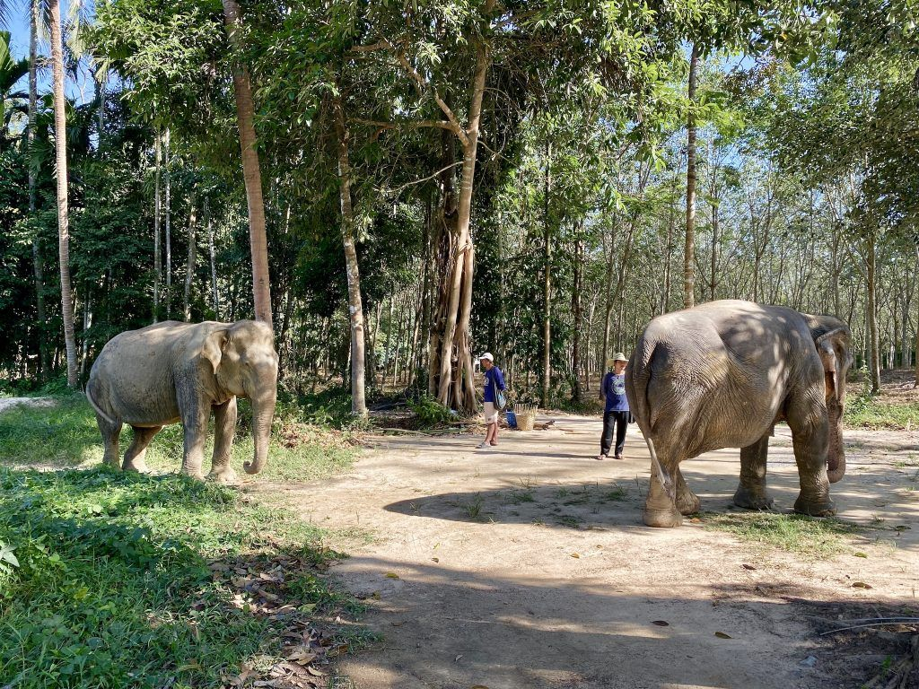 Pfleger kümmern sich liebevoll um die Elefanten im Phuket Elephant Sanctuary. Foto: Sascha Tegtmeyer