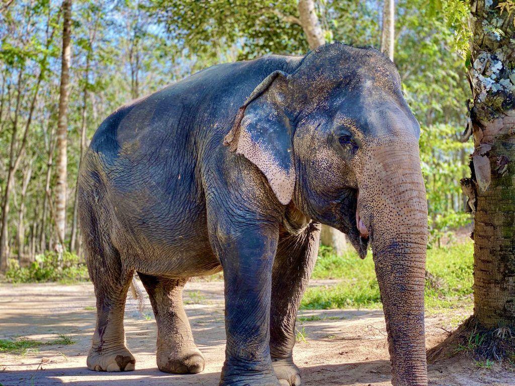 Die Besucher können den Elefanten im Reservat ganz nah kommen. Foto: Sascha Tegtmeyer