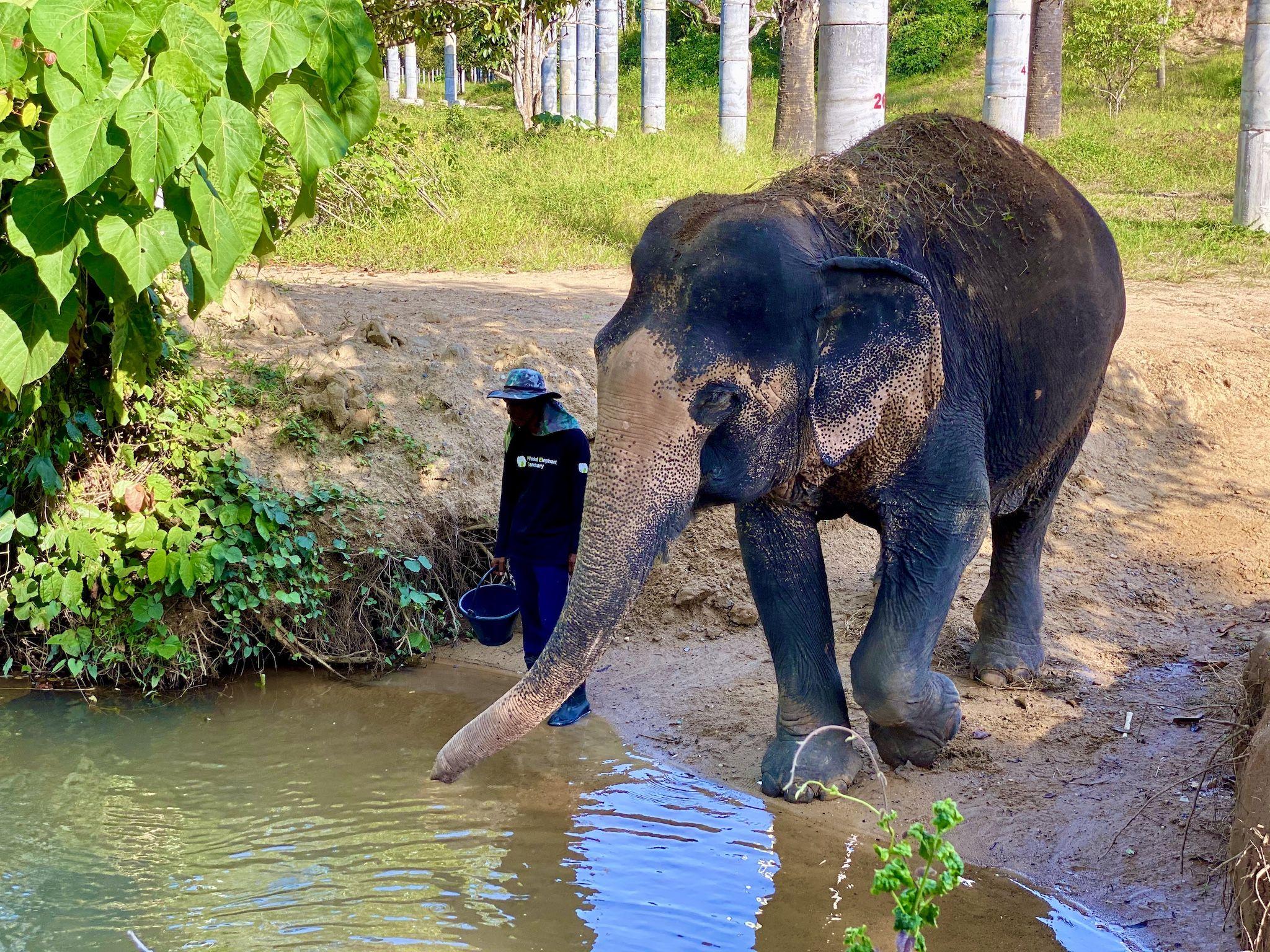 Was zeichnet das Phuket Elephant Sanctuary aus? Ich habe mir die Einrichtung einmal näher angeschaut. Foto: Sascha Tegtmeyer