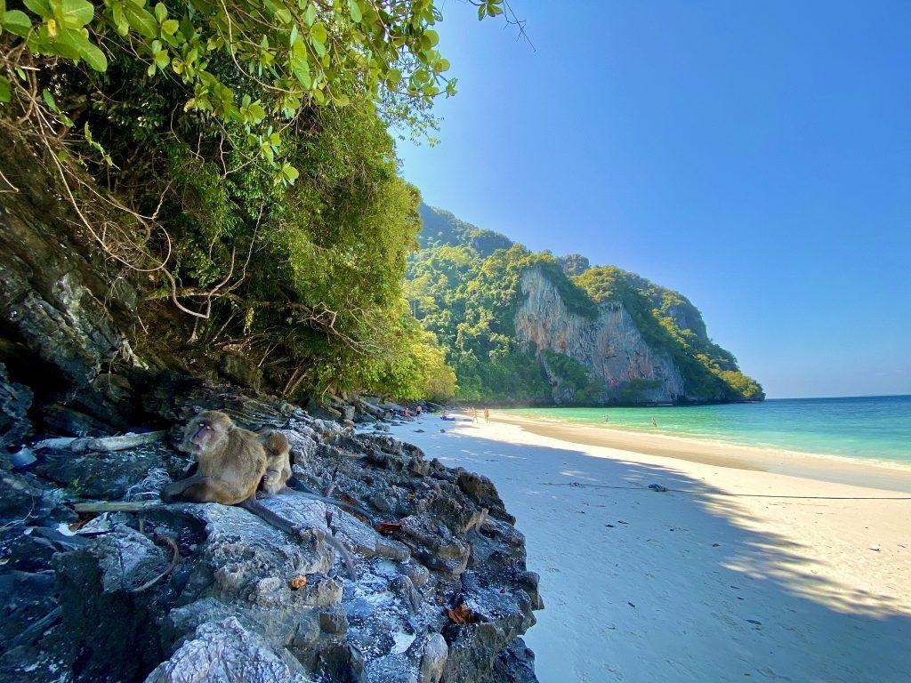Die Affen wachen am Monkey Beach auf Koh Phi Phi über den Strand. Foto: Sascha Tegtmeyer
