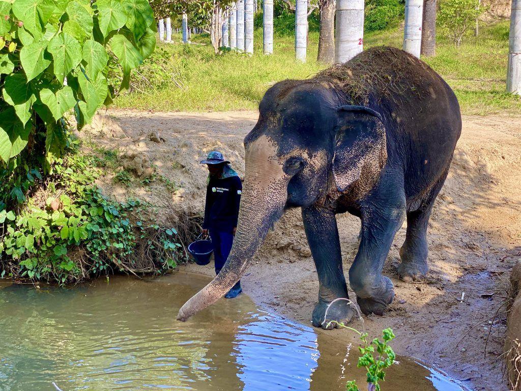 Die geschundenen Elefanten werden im Phuket Elephant Sanctuary medizinisch versorgt und liebevoll gepflegt. Foto: Sascha Tegtmeyer