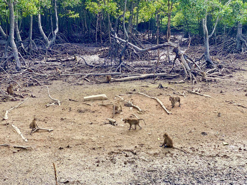 Die Affen leben im Sumpf. Foto: Sascha Tegtmeyer