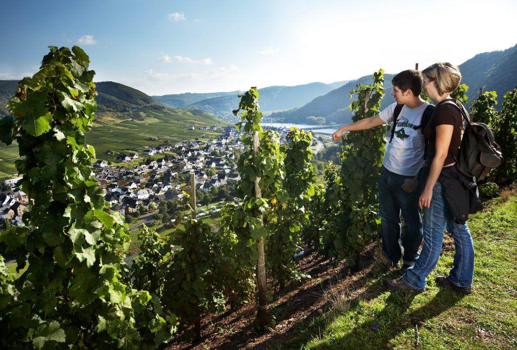 Reisebericht aus Cochem: Spaziergang in den Weinbergen an den Moselhängen. Foto: Tourist-Information Ferienland Cochem