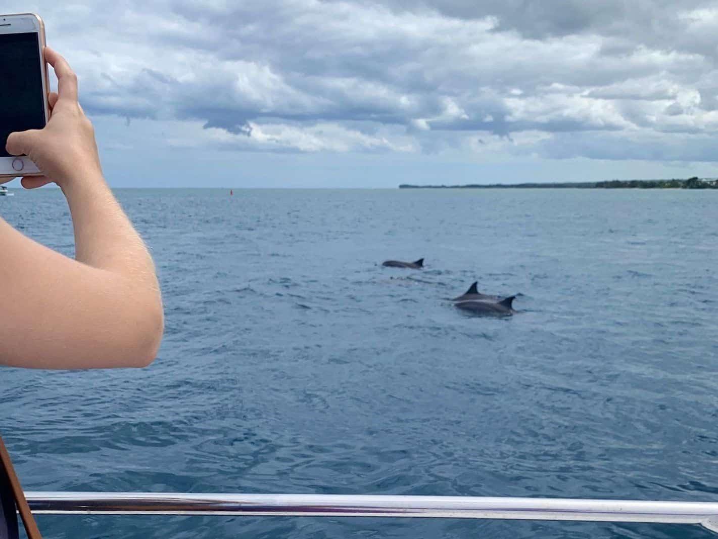 Delfine beobachten auf Mauritius: viele Tourenanbieter bedrängen die Tiere leider.