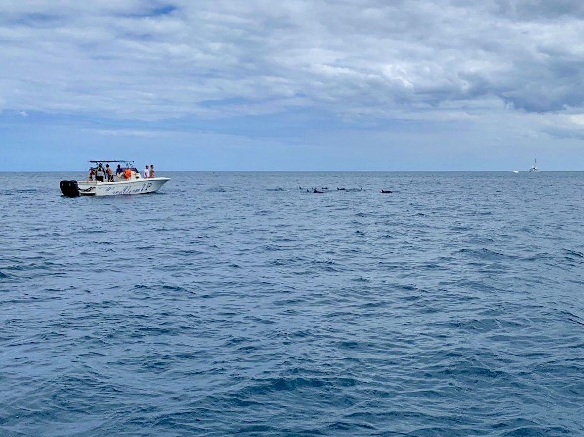 Wo eine Gruppe Delfine ist, befindet sich meistens auch schon ein Ausflugsboot.