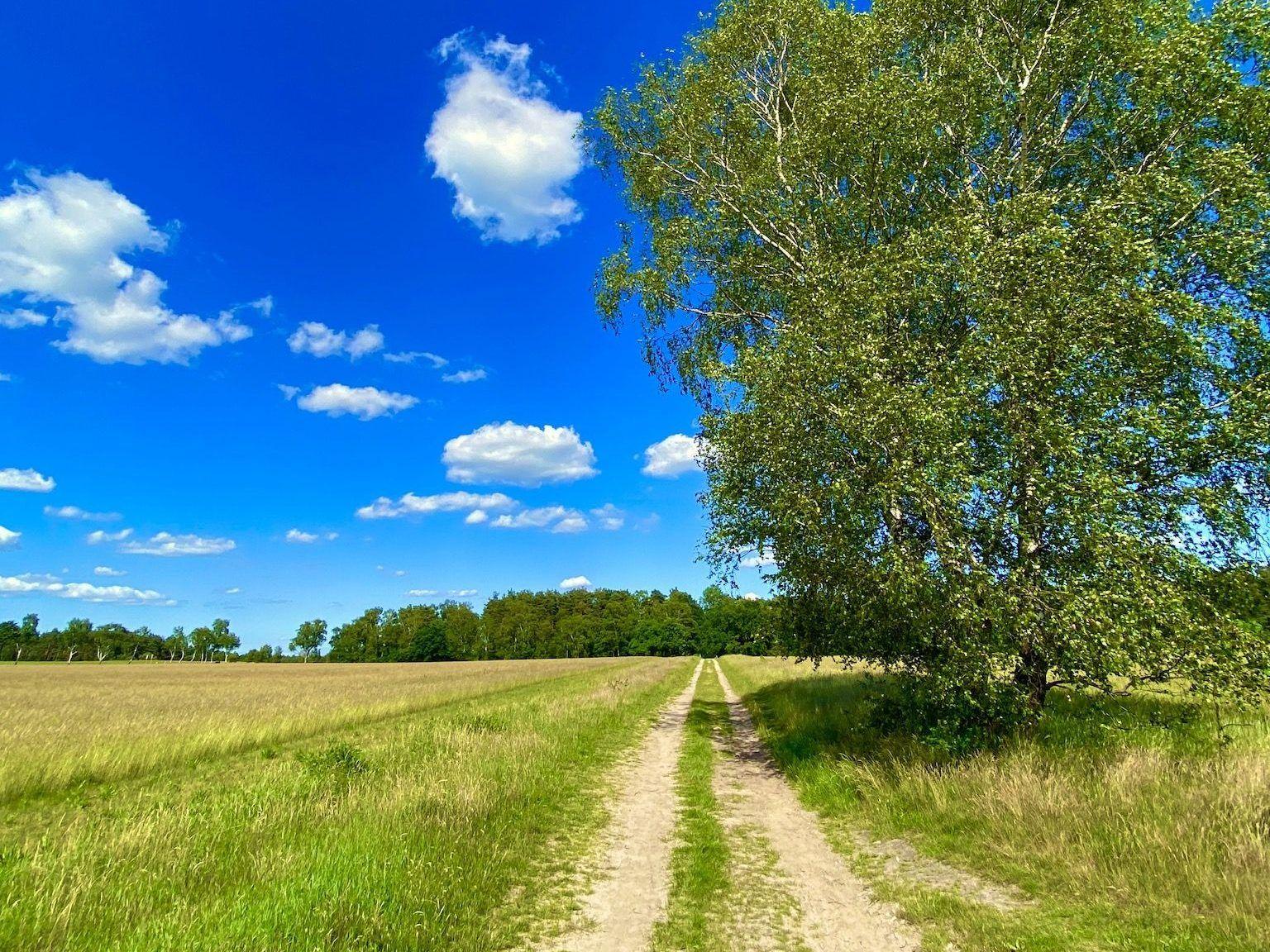 Natur pur: Bei einem Kurzurlaub in der Lüneburger Heide kannst Du wandern, joggen und auf Entdeckungstour gehen. Foto: Sascha Tegtmeyer