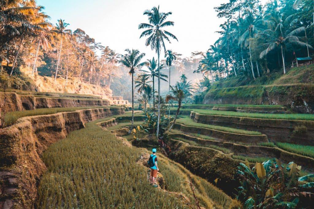 Ganz oben auf meiner Watchlist: Ein Besuch auf der Götterinsel Bali. Foto: Unsplash