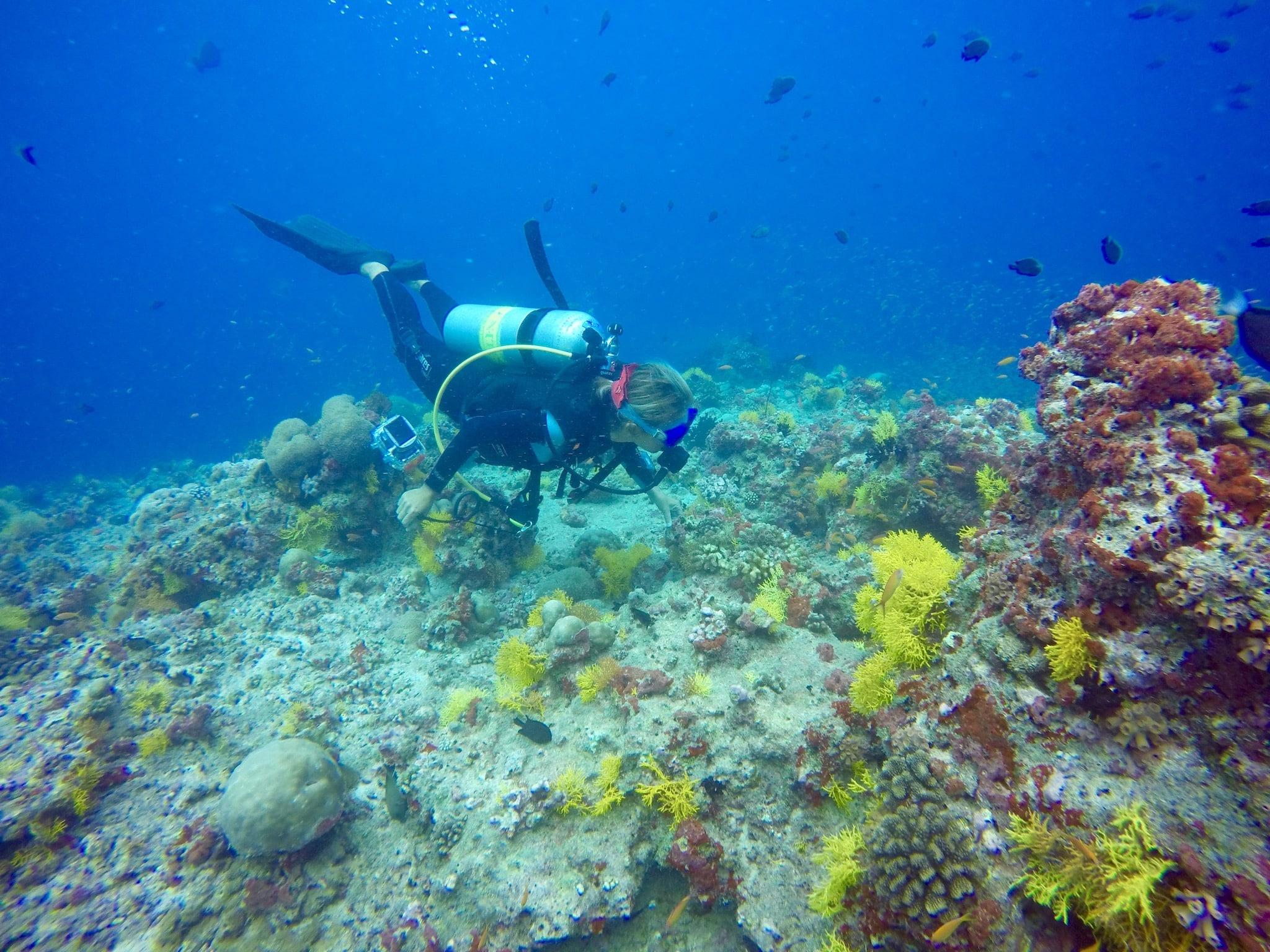 Tauchen auf den Malediven: unter Wasser gibt es unglaublich viel zu entdecken. Foto: Sascha Tegtmeyer Reisebericht Malediven Tipps