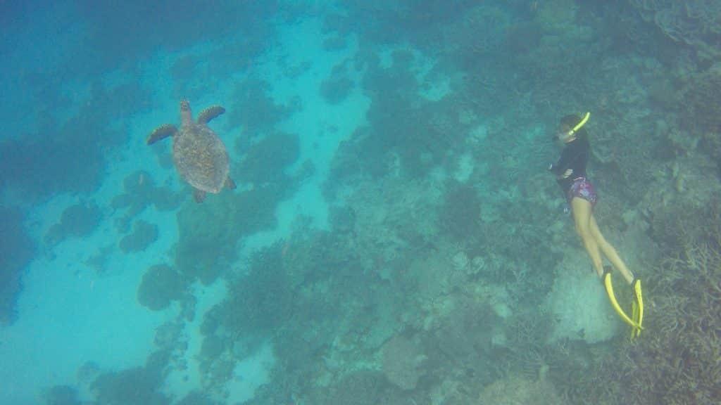 Man kann auch gemeinsam mit der Meeresbiologin der Resortinsel tauchen gehen und eine Menge über die Tierwelt erfahren. Foto: Sascha Tegtmeyer Reisebericht Malediven Tipps