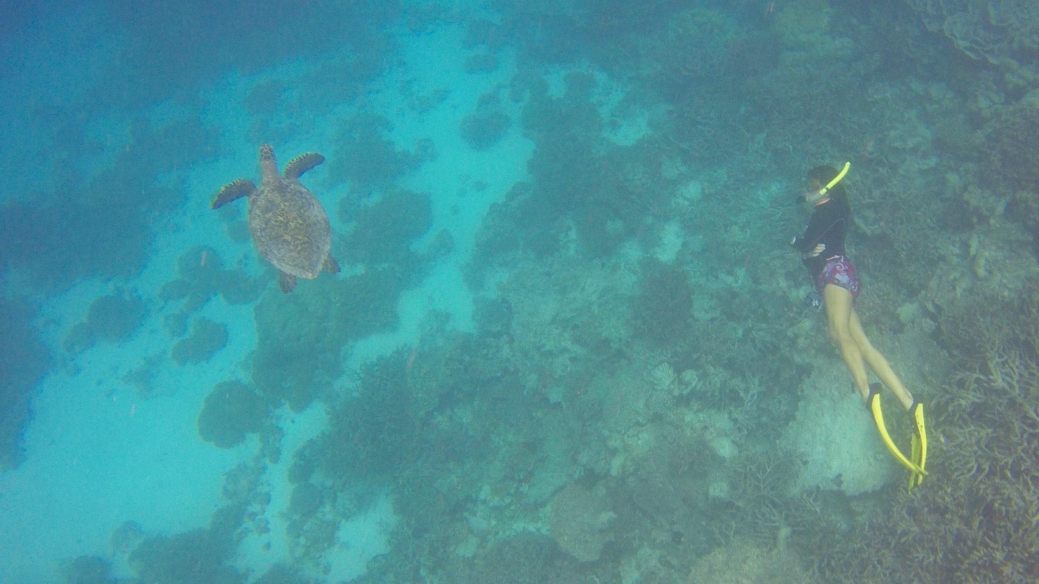 Überall an den Riffen sind Schildkröten zu finden – die Tiere sind leider stark bedroht. Foto: Sascha Tegtmeyer Reisebericht Malediven Tipps