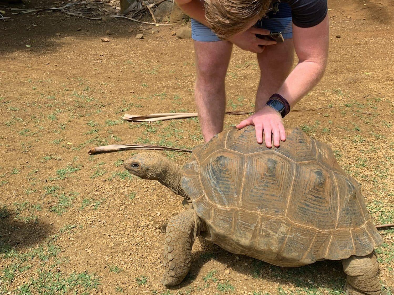 Im La Vanille Nationalpark könnt Ihr Riesenschildkröten beobachten.